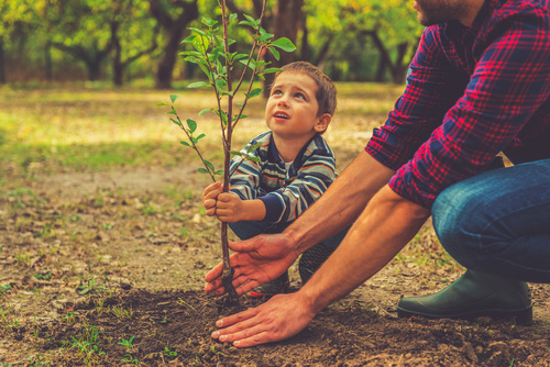 boy helping his father to plant a tree